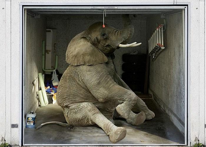 Аэрография на гараже: 3Д рисунок слон